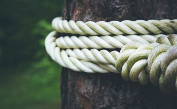 rope fixed to a tree